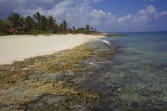 海滩,礁石,棕榈树在古巴 免版税图库摄影