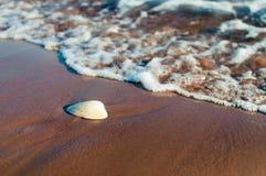 海滩:沙子,水,壳 库存图片
