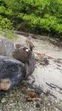 海滩` Mal paÃs ` 免版税图库摄影