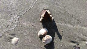 海滩sand.summer背景 免版税库存照片