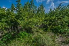 海滩Vegetation3 库存照片