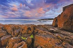 海Birubi红色岩生植物 免版税库存照片
