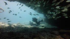 浸没的潜水者在礁石附近,费埃特文图拉岛加那利群岛 股票录像