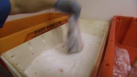 浸洗三文鱼盐溶 影视素材