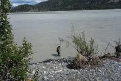浸洗鱼的在科珀河 免版税库存照片