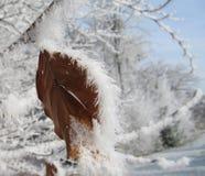 涂上一片唯一叶子的白色霜 免版税库存照片
