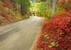 涂柏油的山路通过秋天森林 图库摄影