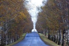 涂柏油的路、秋天和雾 免版税库存图片