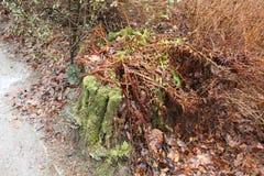 涂柏油铺和它的边缘和老树桩 库存照片