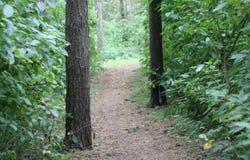 消失入老公园的深度的一条平安的道路有树和绿色灌木密集的丛林的  库存图片