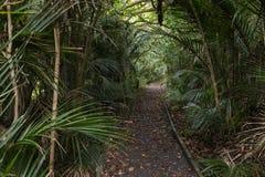 消失在雨林的轨道 免版税图库摄影
