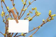 消息垂悬在绿色叶茂盛的书面白色卡片 库存照片