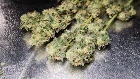 消遣大麻张力 在细节的漂白亚麻纤维的THC收获 免版税图库摄影