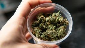 消遣大麻张力 在细节的漂白亚麻纤维的THC收获 库存图片