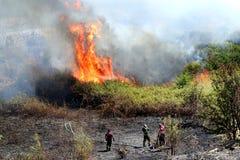 消防队员试图为大火熄灭夏令时 免版税库存图片