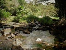 涌入带领有岩石和伸出的树的一个森林池塘在考艾岛夏威夷 图库摄影