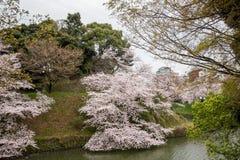 涌入Chidorigafuchi护城河,千代田,东京,日本的充分开花的樱花在春天 免版税图库摄影