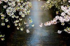 涌入Meguro河,目黑区,东京,日本的樱花在春天 免版税库存图片