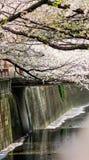 涌入Meguro河,目黑区,东京,日本的樱花在春天 图库摄影