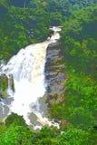 涌出的乳状白色水的巨大的瀑布在厚实的森林-例证里 皇族释放例证