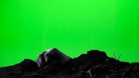 涌现从地面坟墓的蛇神手 日历概念日期冷面万圣节愉快的藏品微型收割机说大镰刀身分 绿色屏幕 017 股票录像