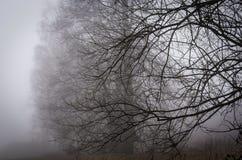 涌现从雾的树鬼的光秃的分支  免版税库存图片