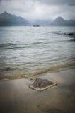 洗涤在多暴风雨的天气的黄貂鱼在海滩在斯凯岛小岛的Elgol在苏格兰 库存图片