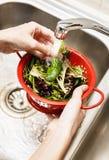 洗涤沙拉混合叶子的手 免版税库存图片