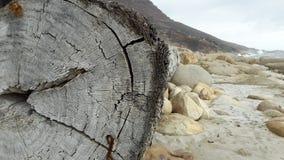 洗涤沿海滩的树干 免版税库存照片