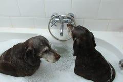 洗涤的狗 库存照片