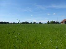 涨潮植物在草甸 库存图片