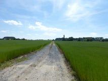 涨潮植物在草甸 免版税库存图片