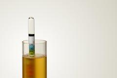 液体比重计在Homebrew 免版税库存图片