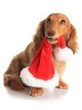 淘气圣诞节的狗 免版税库存照片