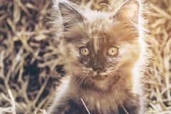 淘气棕色小猫 免版税图库摄影
