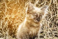 淘气棕色小猫 库存照片