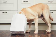 淘气狗在家庭厨房里 库存图片