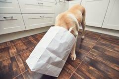 淘气狗在家庭厨房里 图库摄影