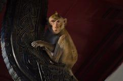 淘气猴子 免版税库存图片