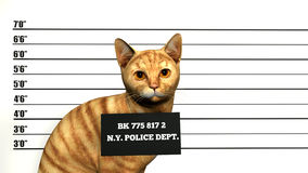淘气,卑鄙坏猫例证 库存照片