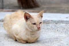 淡桔色与放下在具体地面上的猫的白色颜色 免版税库存图片
