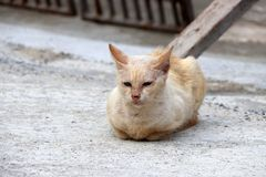 淡桔色与放下在具体地面上的猫的白色颜色 库存图片