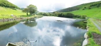 淡水养渔与杂草问题的水池水 免版税库存照片