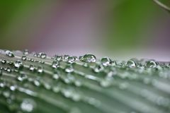 淡水在绿色叶子滴下本质上 库存照片