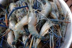 淡水大虾,巨型河虾 免版税图库摄影
