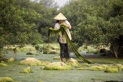 淡水海藻村民或渔夫在湄公河 免版税库存图片