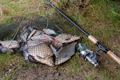 淡水鲂鱼和银色鲂在手网与渔场抓住在它和钓鱼竿有卷轴的 库存照片