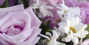 淡粉红的玫瑰和白色菊花 免版税图库摄影