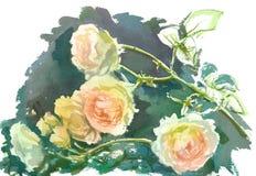 淡粉红的黄色玫瑰 免版税库存照片
