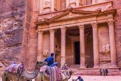 淡粉红色红色财宝下午骆驼Petra约旦 库存照片
